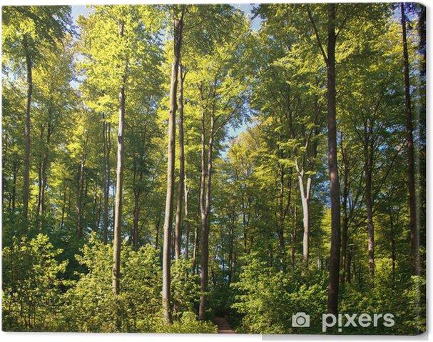 Tableau sur toile Forêt de hêtres - Merveilles naturelles