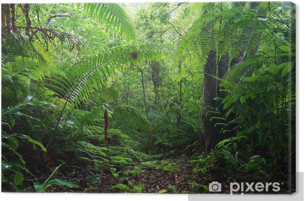 Tableau sur toile Forêt de Mont Yanbaru Yonaha - Thèmes