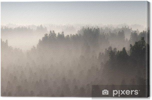 Tableau sur toile Forêt de pins dense dans la brume du matin. - Paysages