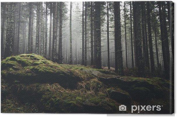Tableau sur toile Forêt sauvage de paysage avec des arbres de pin et de mousse sur les rochers - Thèmes