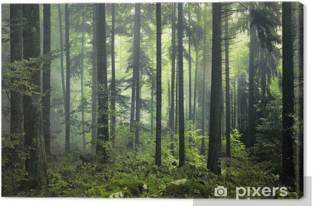 Tableau sur toile Forêt sombre mystérieuse - Styles
