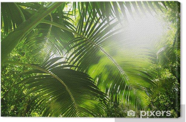 Tableau sur toile Forêt tropicale - Thèmes