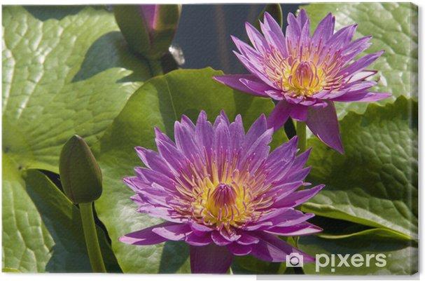 Tableau sur toile Fowers violets - Fleurs