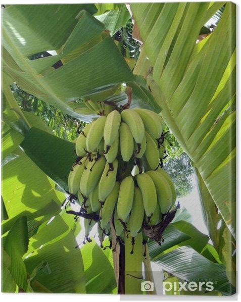 Tableau sur toile Fruits d'arbres fruitiers tropicaux, une banane - Arbres