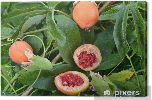 Tableau sur toile Fruits de la Passion en coupe - Plantes