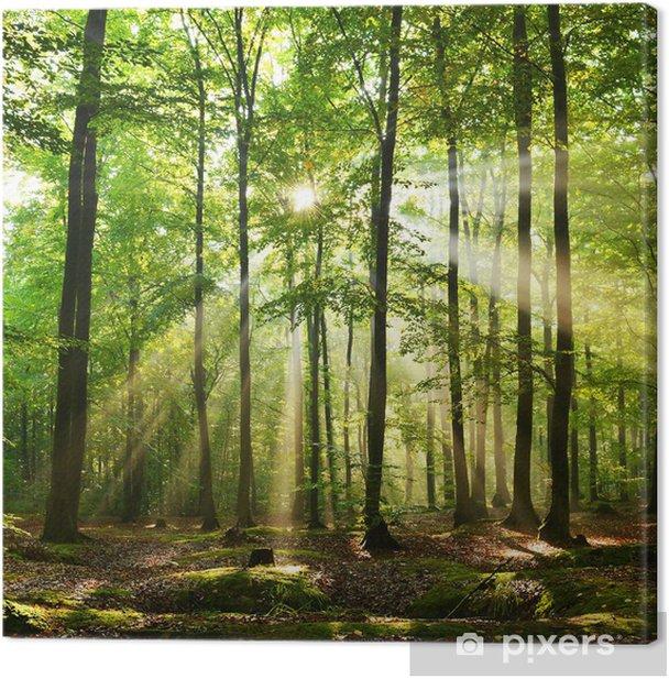 Tableau sur toile Futaie - Forêt