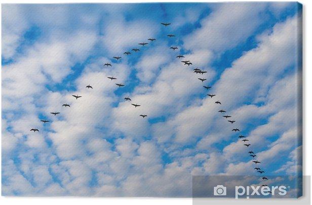 Tableau sur toile Geeses - Oiseaux