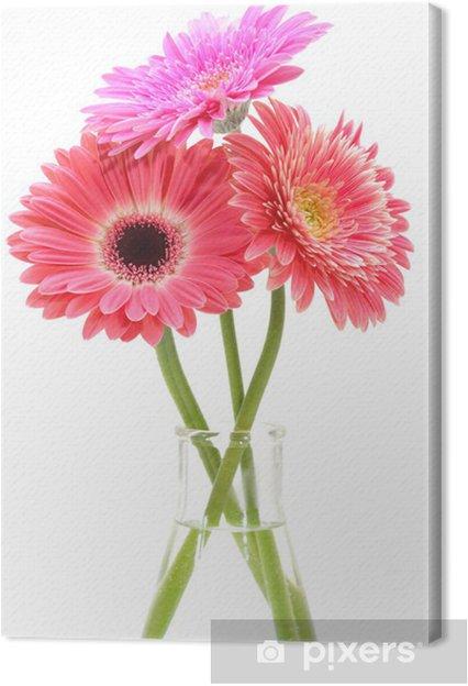 Tableau sur toile Gerbera bouquet de fleurs isolé sur fond blanc. - Fleurs