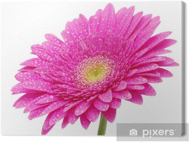 Tableau sur toile Gerbera fleur - Fleurs