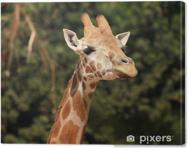 Tableau sur toile Girafe - Thèmes