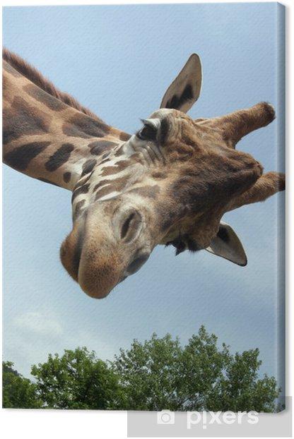 Tableau sur toile Giraffa - Thèmes