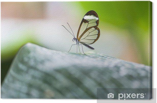 Tableau sur toile Glasswing papillon - Greta oto morgane - Autres Autres