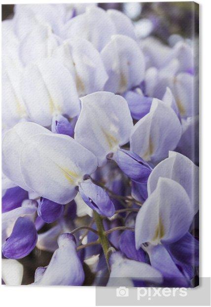 Tableau sur toile Glicine - Fleurs