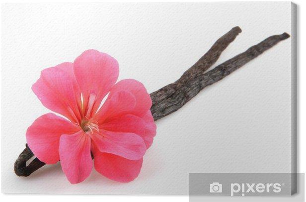 Tableau sur toile Gousse de vanille et fleur - Plantes