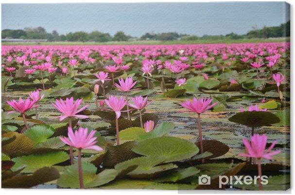 Tableau sur toile Grand groupe de fleurs de lotus dans le lac - Fleurs