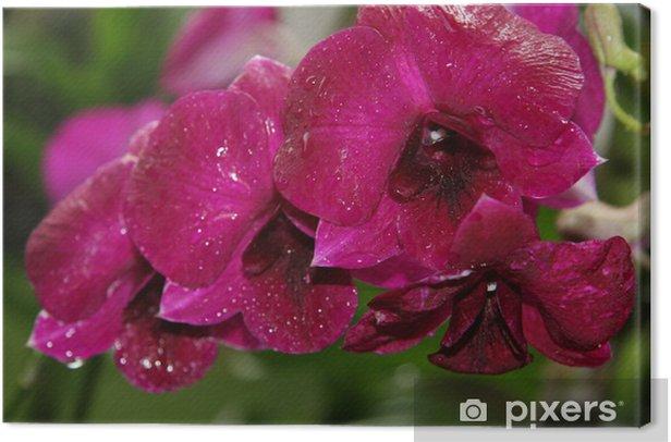 Tableau sur toile Grande orchidée rouge - Fleurs