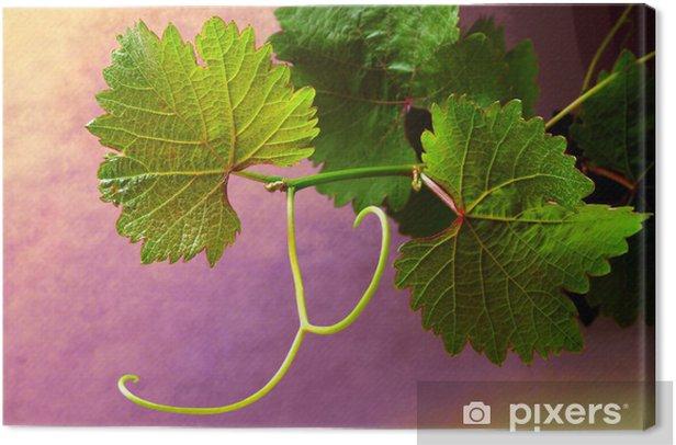 Tableau sur toile Grapevine sur fonds colorés - Plantes