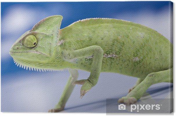 Tableau sur toile Green chameleon - Thèmes