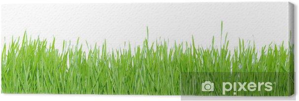Tableau sur toile Green grass - Plantes