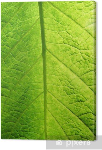 Tableau sur toile Green leaf texture - Saisons