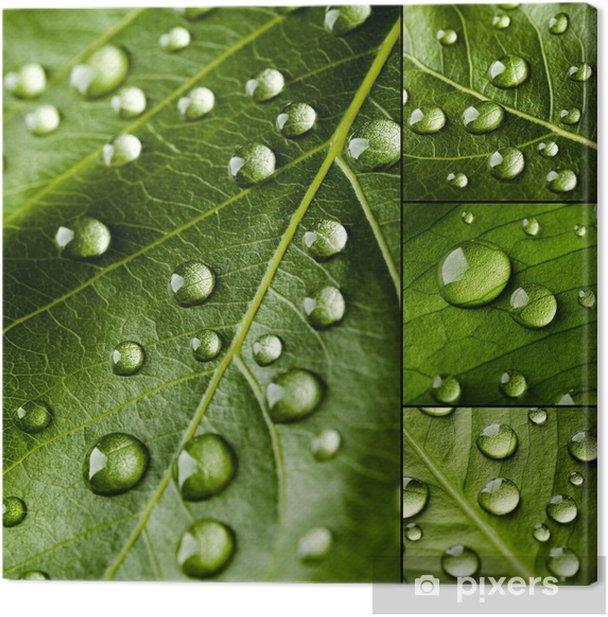 Tableau sur toile Green leaves collage - Plantes