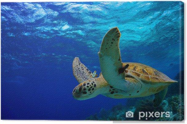 Tableau sur toile Green Sea Turtle nage le long de récifs tropicaux - Autres Autres