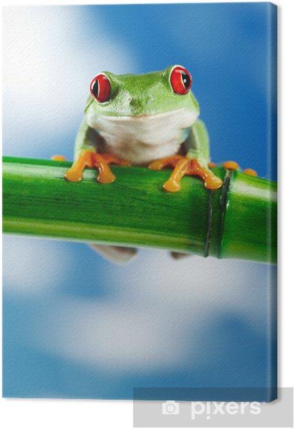 Tableau sur toile Grenouille verte avec des yeux rouges. - Autres Autres