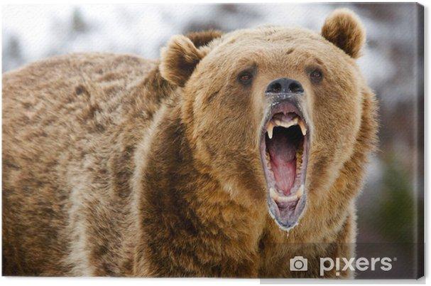Tableau sur toile Grizzly Bear Growling - Thèmes