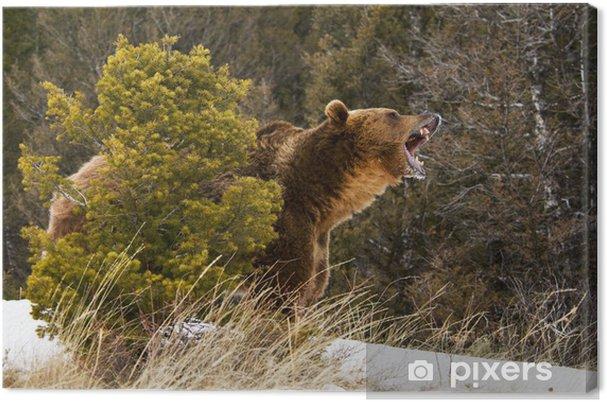 Tableau grizzli grizzly 1 tableaux sur toile grizzly bear