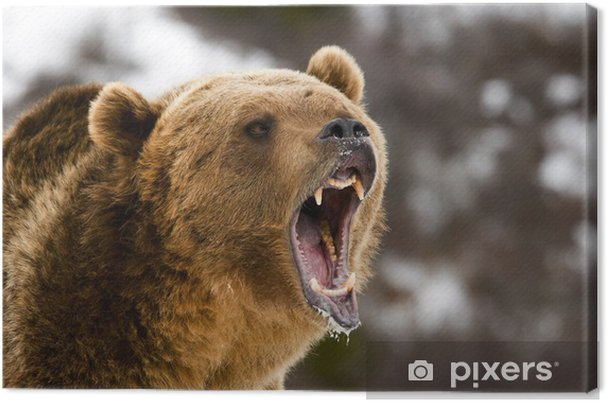 Tableau grizzli grizzly 2 tableaux sur toile grizzly bear