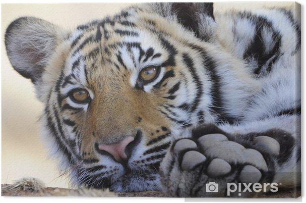 Tableau sur toile Gros coup Portrait d'un tigre du Bengale - Thèmes