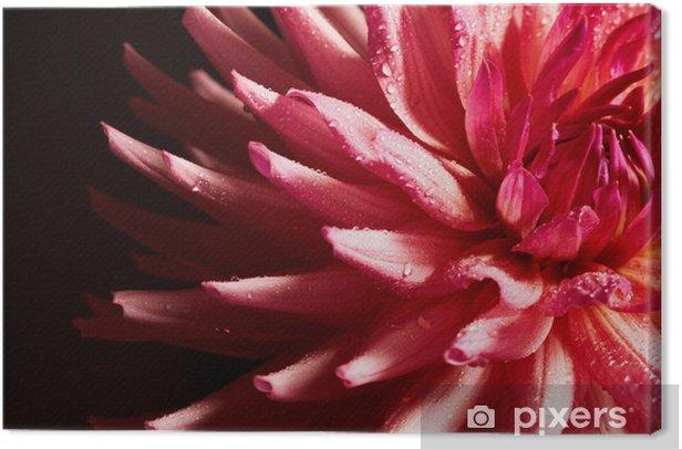 Tableau sur toile Gros plan de dahlia rouge avec des gouttes d'eau - Fleurs