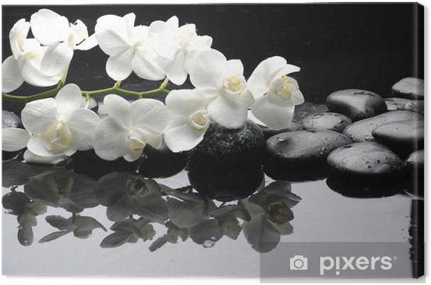Tableau sur toile Gros plan orchidée blanche avec de l'eau en pierre tombe - Styles