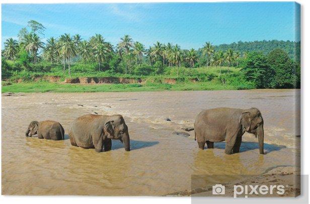 Tableau sur toile Groupe d'éléphants dans la rivière - Saisons