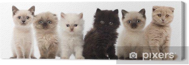 Tableau sur toile Groupe de British shorthair et chatons à poils longs britanniques - Thèmes