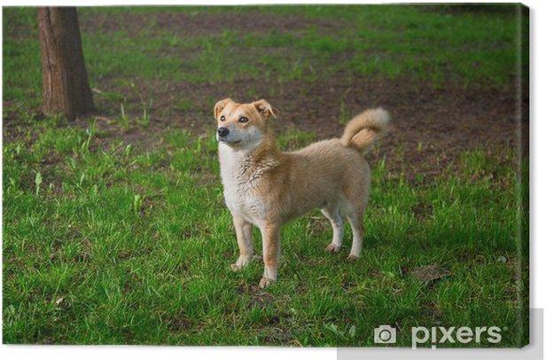Tableau sur toile Herbe gingembre chien - Thèmes