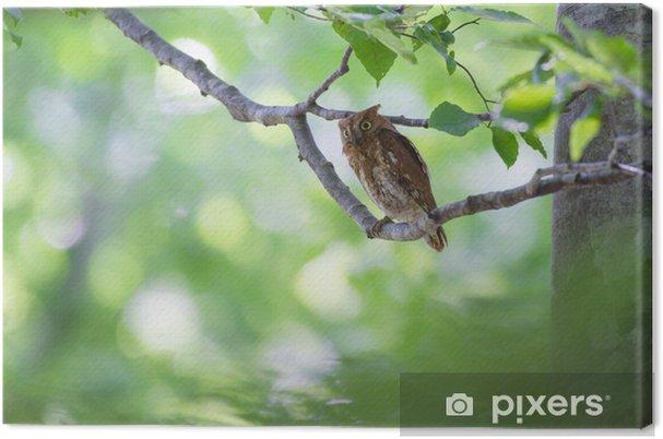 Tableau sur toile Hibou petit-duc - Oiseaux
