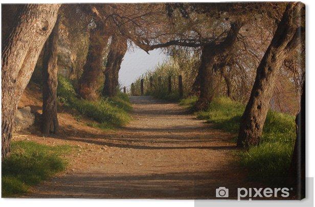 Tableau sur toile Hors des sentiers battus - Forêt
