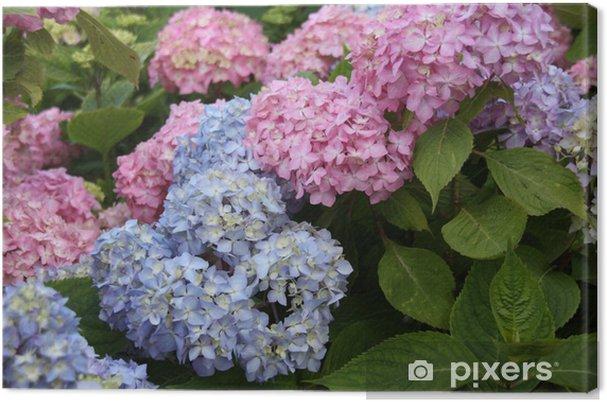 Tableau sur toile Hortensia bleu rose vert zoom fleur belle dehors friands - Fleurs