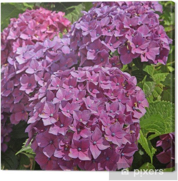 Tableau sur toile Hortensia mauve - Fleurs