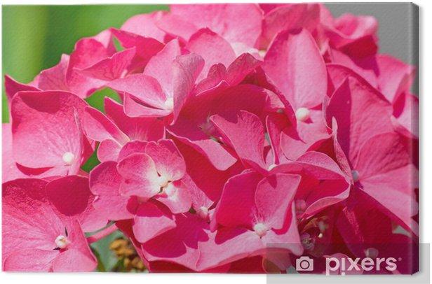 Tableau sur toile Hortensia rose près - Fleurs