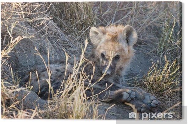 Tableau sur toile Hyène ourson - Afrique