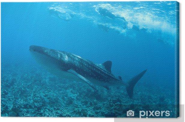 Tableau sur toile Îles requin baleine __gVirt_NP_NN_NNPS<__ maldive - Animaux marins