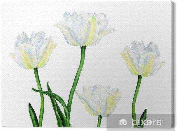 Tableau sur toile Illustration d'aquarelle d'une belle fleurs de tulipes blanc - Sticker mural
