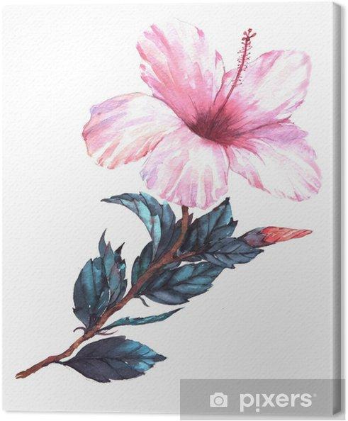 Tableau Sur Toile Illustration Florale Aquarelle Dessinée à La Main De Loffre Blanche Avec Fleur Dhibiscus Rose Dessin Naturel Isolé Sur Le Fond