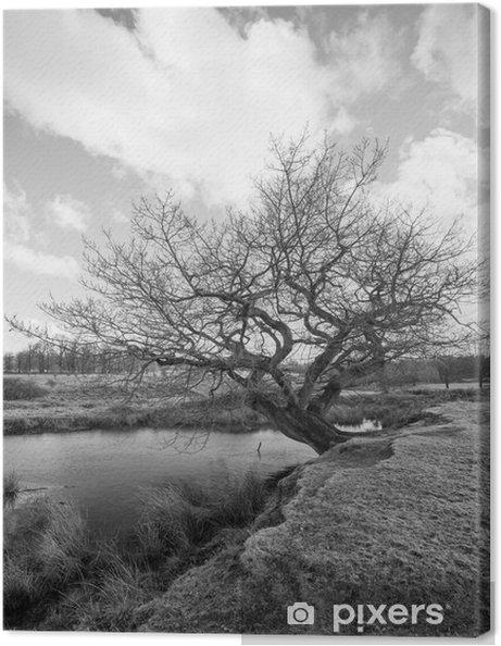 Tableau sur toile Image en noir et blanc d'un vieil arbre par un étang - Styles