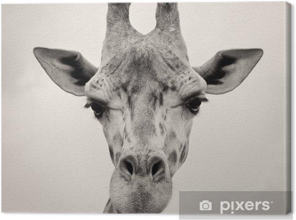 Tableau sur toile Image vintage de sépia d'un chef Girafes - Thèmes