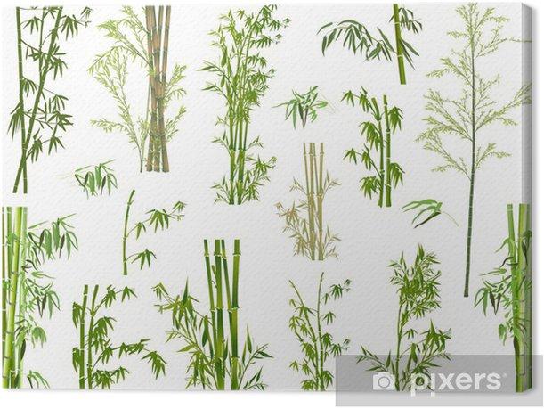 Tableau sur toile Isolé grand nombre de branches de bambou vert - Plantes