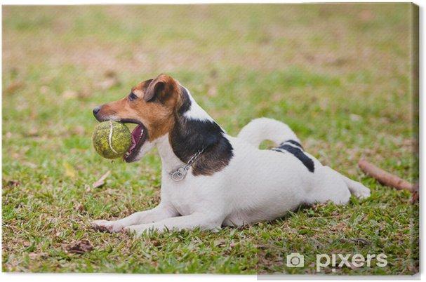Tableau sur toile Jack russel terrier - Mammifères