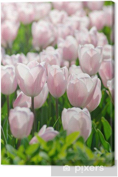 Tableau sur toile Jardin de fleurs de tulipes en été - Fleurs